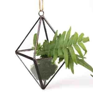 glass diamond air plant succulent planter terrarium