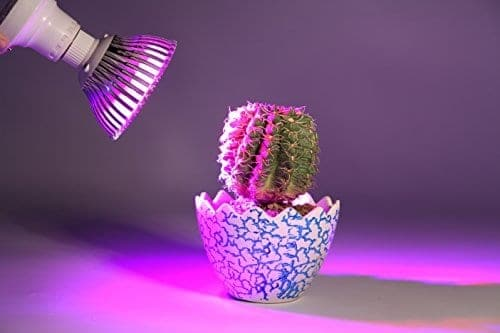 light and sun for succulents and cacti
