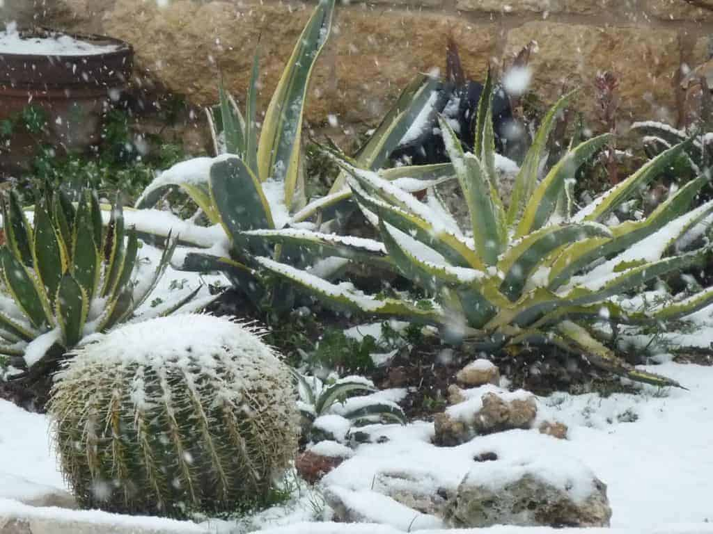 Hardiness Zones and Succulents