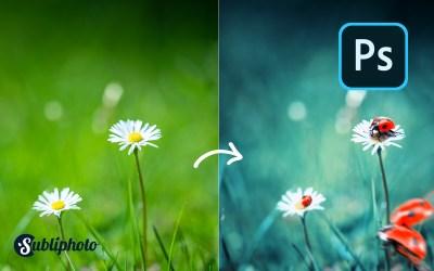 Transformer une photo banale en une illustration sur Photoshop