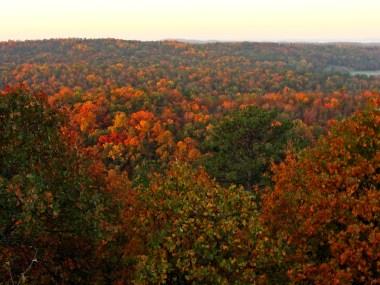 COLOR AT SUNRISE -- Just-risen sun highlights autumn leaves.