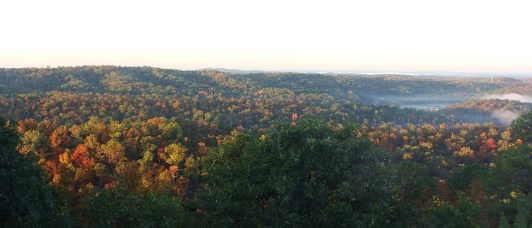 Wide shoot of fall foliage.