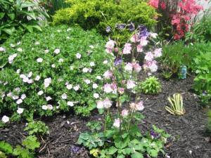 Columbine, Lupine, Paper White Easter Lilly,Hardy Pink Gerenium