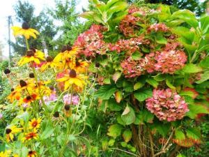 autumn-flowers-1