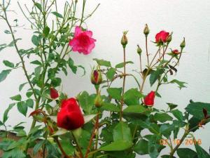 autumn-flowers-13