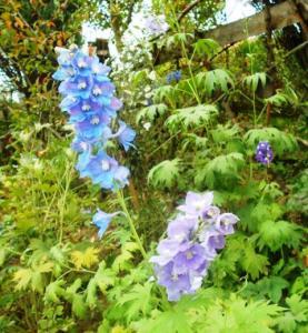 autumn-flowers-19