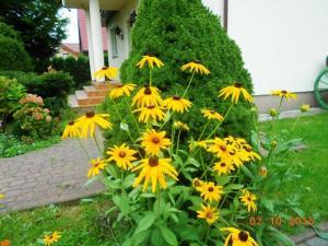 autumn-flowers-2