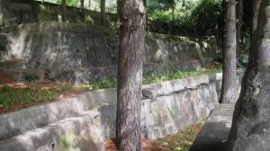 cement-retaining-walls-around-trees