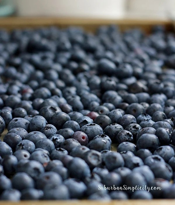 Fresh washed blueberries.