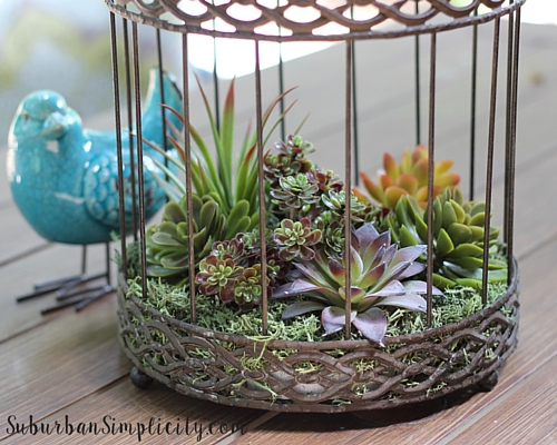 Decorate with Succulents Outside