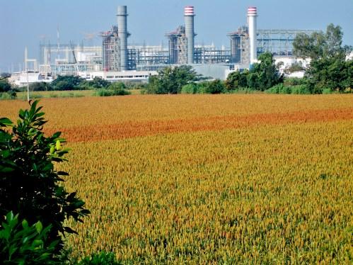 Frente a frente. Los cultivos de las tierras que no fueron vendidas aún florean ante las torres de metal como diciendo aquí estamos y no nos vamos.