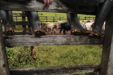 En este Caracol, la ganadería es una de las principales actividades económicas, tanto para el autoconsumo como para la venta.