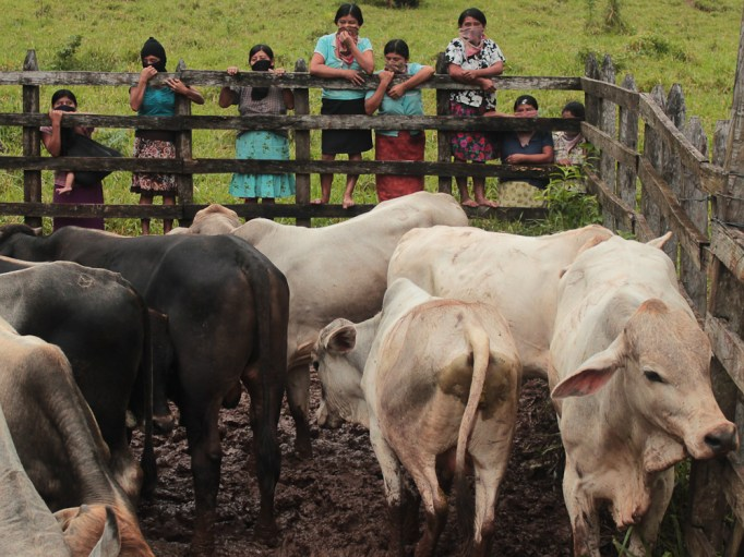 El ganado pertenece, en general, a la comunidad. La Junta de Buen Gobierno ayuda a su buena administración.