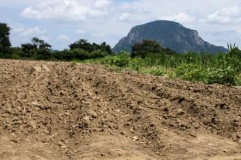 Estos son los surcos que se realizan para sembrar la semilla del amaranto y el maíz.