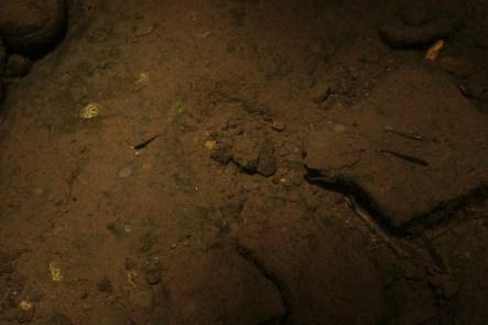 Las aguas provenientes del Popocatépetl atraviesan los pueblos de Alpanocan, Tlacotepec, Zacualpan, Temoac y Huazulco. Sin embargo, lucen limpias y aún conservan especies acuáticas.