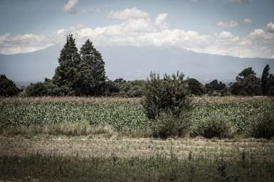 Dentro del TPP México la audiencia «Violencia contra el maíz, la soberanía alimentaria y la autonomía» ha dejado claro el peligro que implica, para la sobrevivencia futura, la aceptación de la ley de biotecnología. Fotografía: Heriberto Paredes
