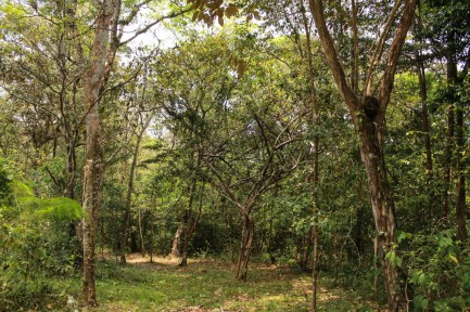 El bosque del BIC de Santa María Chimalapa. Fotografía: Valentina Valle