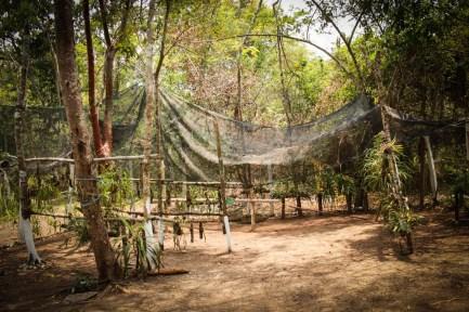Vivero de las arquídeas en el BIC de Santa María Chimalapa. Fotografía: Valentina Valle
