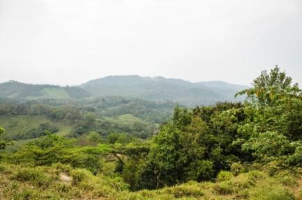 La riqueza de la vegetación en la cabecera municipal de Santa María Chimalapa. Fotografía: Valentina Valle