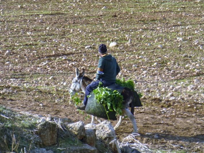 Un campesino y su burro, en el pueblo Bardala en el norte del Valle. Fotografía: Susana Norman