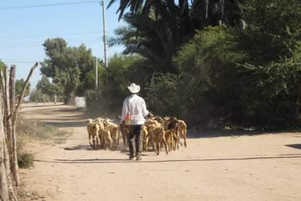 Buaysiacobe: continúa el despojo contra los yoremes de Sonora. Parte 1