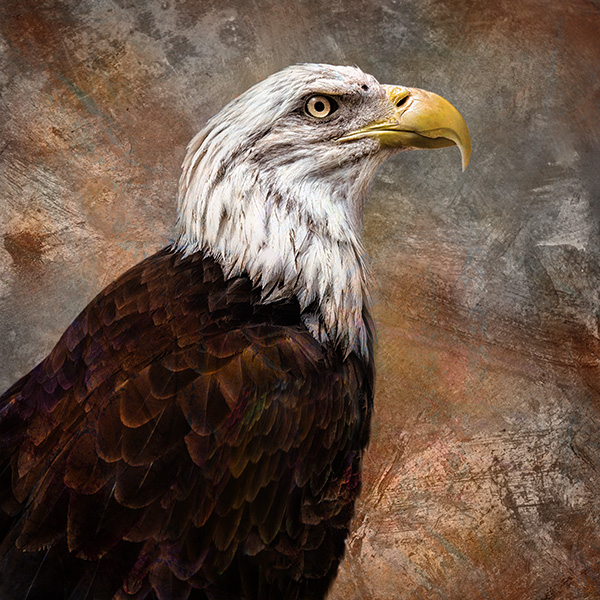Eagle art photo
