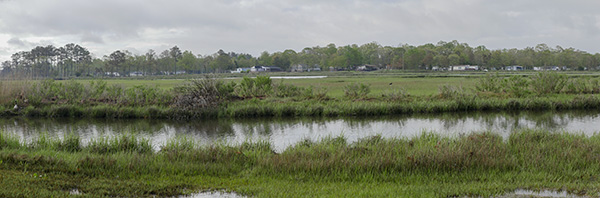 delaware marsh view panoramic image