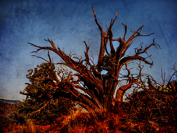 juniper saturated image
