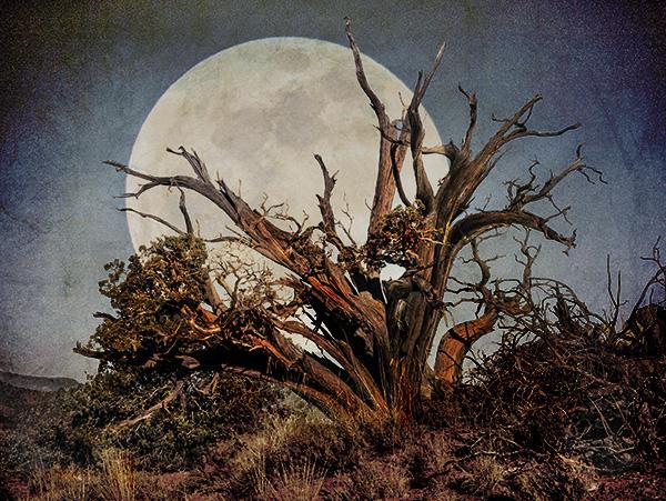 juniper moon image