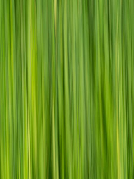 wetlands grasses