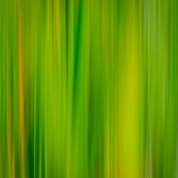 grasses with movement at sedona wetlands