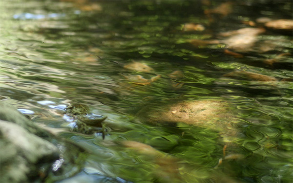 screen shot of beaver creek video
