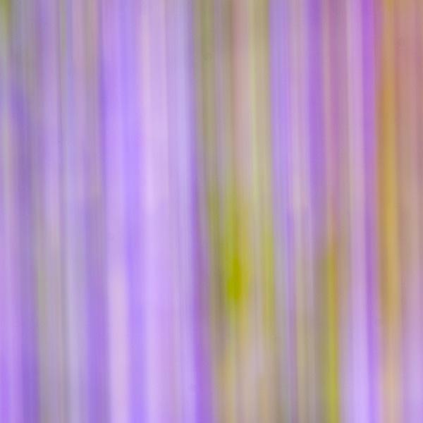 flower stripe background image