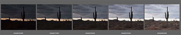 cactus bracket image of five images