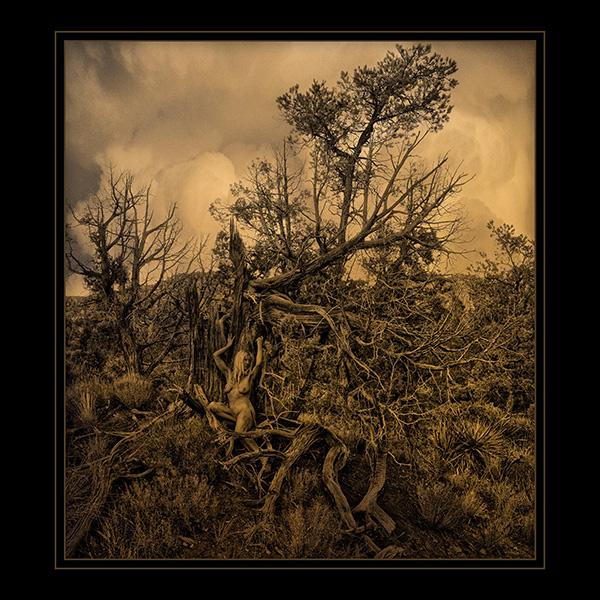 Pash in the juniper tree