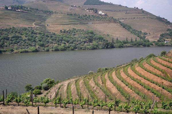 vineyard photo by ken masadams