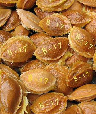 apricot-seeds-source-of-b-17