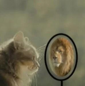 cat-lion