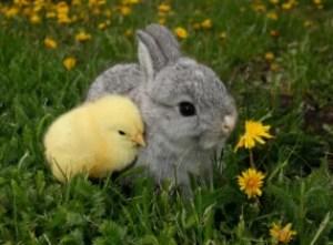 duck-bunny