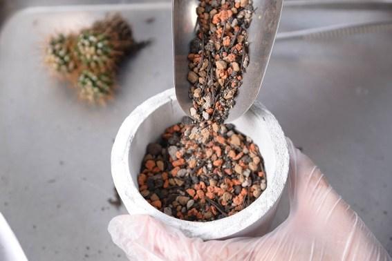 多肉植物專用介質-赤玉土 DSC 72532