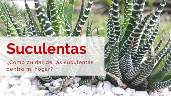 Suculenta cebra haworthia attenuata cuidados for Como cuidar las plantas