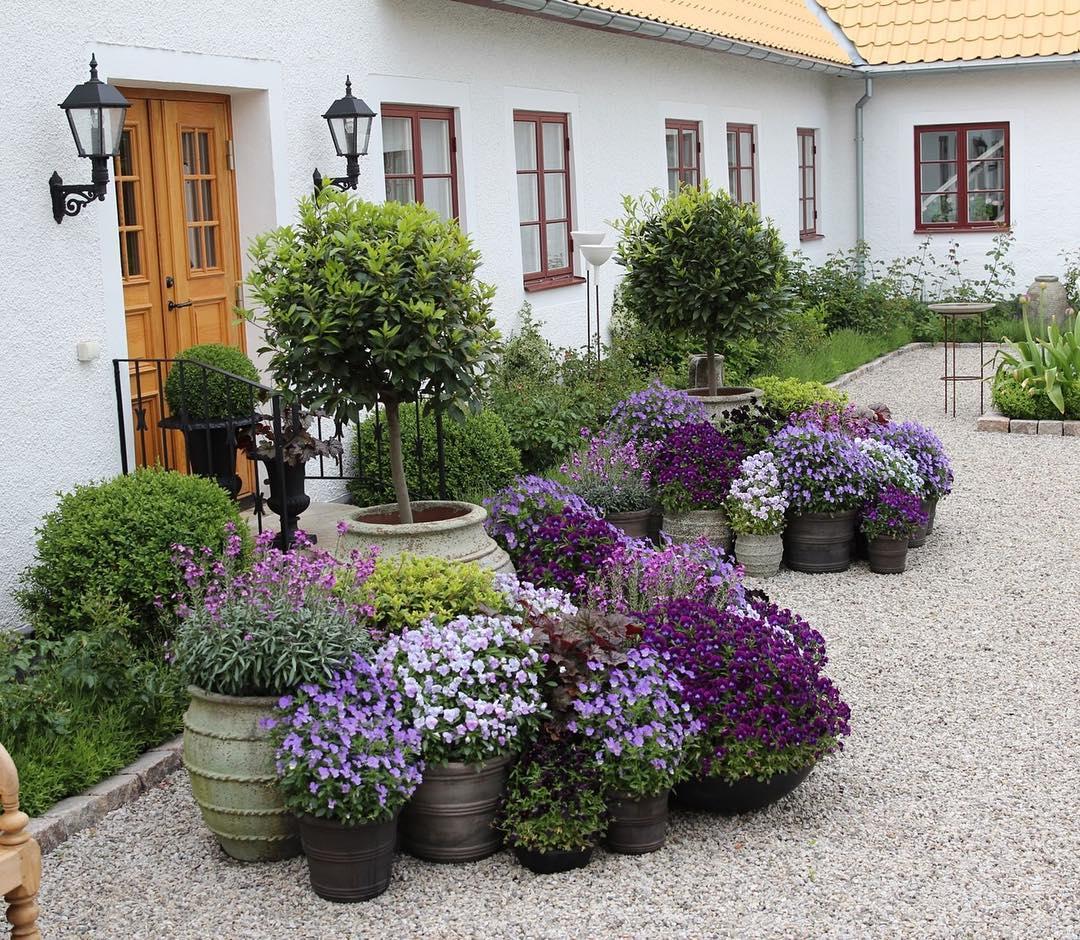 Tipos de plantas ornamentales succulent avenue for Imagenes de arboles ornamentales