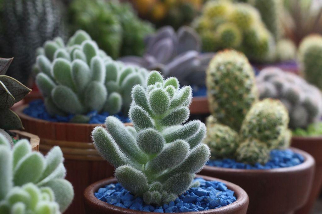 Qu son las plantas suculentas succulent avenue for Cactus de exterior