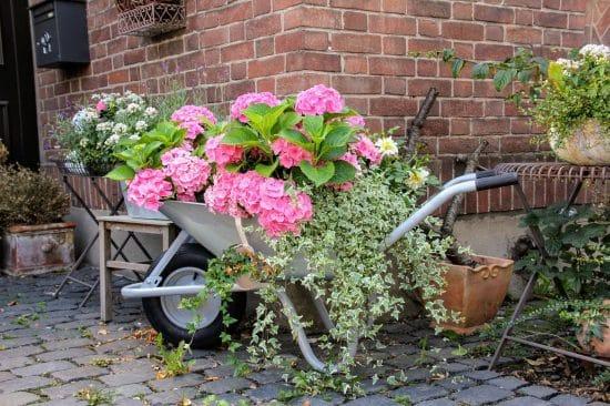 Carretillas con flores hortensias