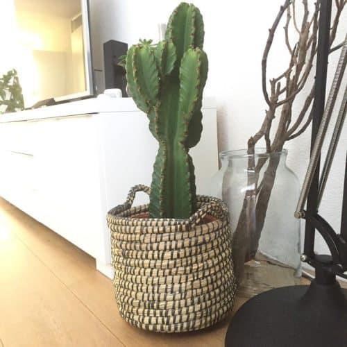 Los mejores cactus de interior