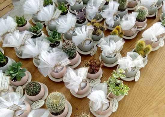 Recuerdos de bodas con cactus.