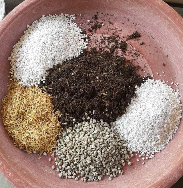 Succulent soil potting mix