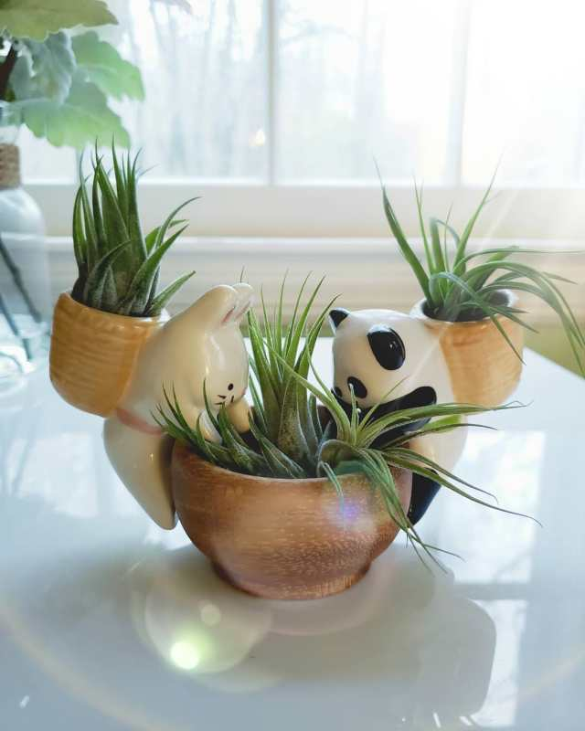Air plants in planter with panda