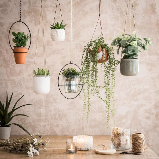 Hanging planters for succulents