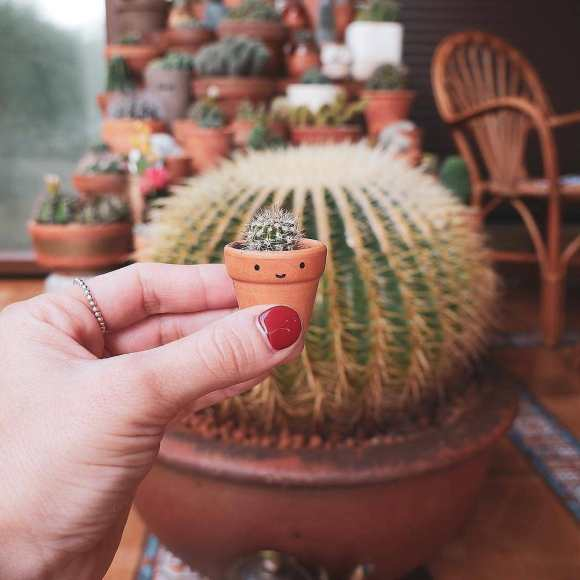 how to repot cactus plant